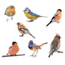 Kleurrijk-vogels