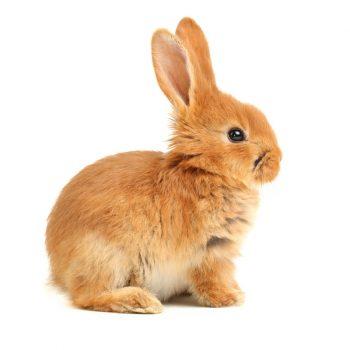 muursticker-konijn-babykamer-kinderkamer