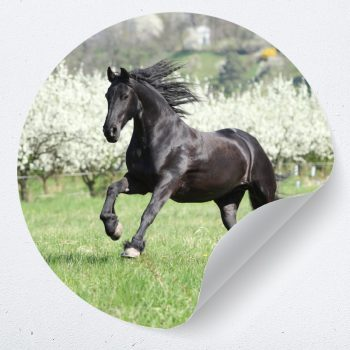 behangcirkel muurcirkel paard galloperend kinderkamer meisjeskamer paardenkamer accessoires