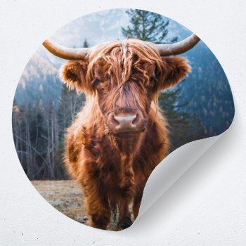 muurcirkel behangcirkel dieren stier koe zelfklevend muurdecoratie inspiratie ideeen